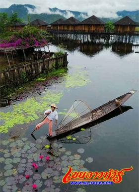 อินเล ทะเลสาบอินเล พายเรือด้วยเท้าวิถีชีวิตชาวอินคาเมียนม่าร์